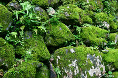 камень мха Стоковые Изображения RF