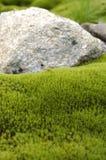 камень мха Стоковое фото RF