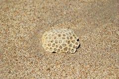 Камень на пляже песка Стоковые Изображения RF