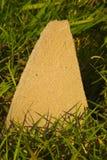 Камень на лужайке Стоковая Фотография