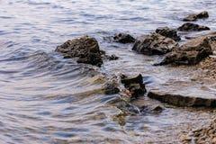 Камень около реки Волны, который побежали на береговой линии Заход солнца лета Лучи солнца отражены в воде стоковые фотографии rf