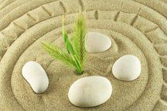 камень песка завода стоковое изображение