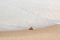 Камень подметенный морем оранжевый на песчаном пляже стоковое фото rf