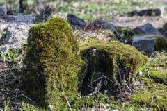 Камень, покрытый мх в парке Стоковое Изображение RF