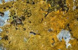 Камень покрытый с лишайником Стоковая Фотография RF