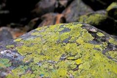 Камень покрытый с мхом и лишайником Стоковое Фото