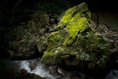 Камень покрытый с мхом 1 Стоковые Фото