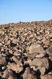 камень поля стоковая фотография rf