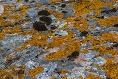 камень предпосылки детальный реальный очень Текстура природы с желтым мхом Стоковое Изображение