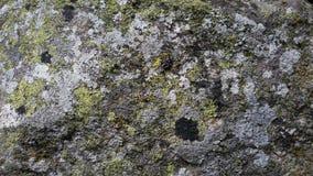 камень предпосылки детальный реальный очень Стоковые Фотографии RF