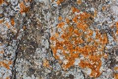 Камень предусматриванный предпосылкой лишайника Стоковое Изображение RF