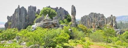 камень пущи Стоковая Фотография RF