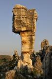 камень пущи s фарфора Стоковая Фотография RF