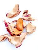Камень плодоовощ персика изолированный на белизне Стоковое Изображение