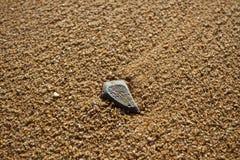 Камень пляжа Стоковая Фотография