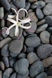 камень реки камушков цветка серый Стоковая Фотография