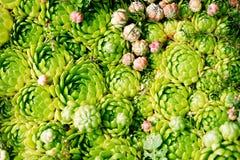 камень роз сада цветка стоковые изображения rf