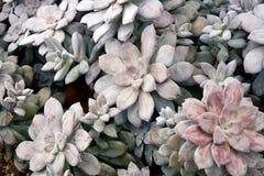 камень роз цветка фона красивейший стоковая фотография rf