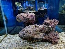 камень рыб, невидимое  🠠стоковые изображения rf