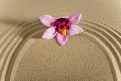 камень сада цветков Стоковые Изображения
