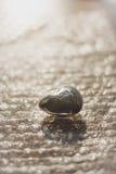 Камень сердца побрякушки влюбленности Стоковая Фотография