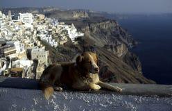 камень силла собаки Стоковая Фотография RF