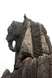 камень слона стоковые изображения