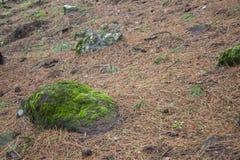 Камень с мхом на лесе стоковая фотография