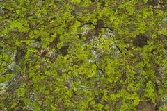 Камень с мхом Стоковое Изображение