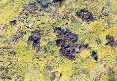 Камень с предпосылкой лишайника Стоковые Фото