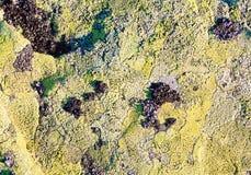Камень с предпосылкой лишайника Стоковые Фотографии RF