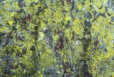 Камень с предпосылкой лишайника Стоковые Изображения RF