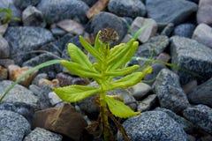 камень цветка Стоковое Фото