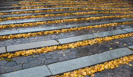 камень шагов листьев осени Стоковые Фото