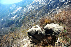 камень Стоковые Изображения