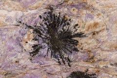Камень Aegirine макроса в charoite на белой предпосылке стоковое изображение