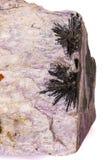 Камень Aegirine макроса в charoite на белой предпосылке стоковые изображения