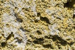 Камень Coquina естественный пористый Конструкционный материал стоковое фото rf