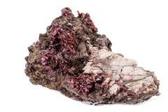 Камень Erythrite макроса минеральное на белой предпосылке стоковое фото rf