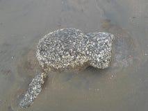 Камень Probal пляжа моря St Martin стоковая фотография