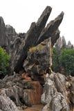 камень shilin пущи стоковое изображение rf