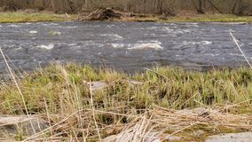 Камера двигает над чистой свежей водой потока леса бежать над мшистыми утесами сток-видео