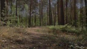 Камера двигает над землей и мухами над лежа деревом Лежа дерево на пути камеры акции видеоматериалы