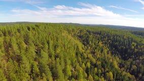 Камера летая высоко над большим елевым лесом дерева акции видеоматериалы