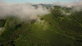 Камера неимоверного трутня воздушная поднимаясь от леса к горизонту европейская пуща видеоматериал