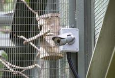 Камеры CCTV Стоковое Изображение RF