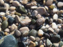 Камешек песка стоковые фотографии rf
