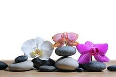 Камешки Дзэн и цветки орхидеи стоковая фотография rf