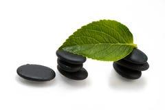Камешки и зеленые лист Стоковые Изображения RF