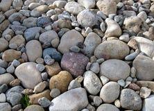 Камешки различных размера и формы, сада лета Стоковые Фотографии RF